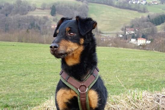 Beratung vor dem Hundekauf