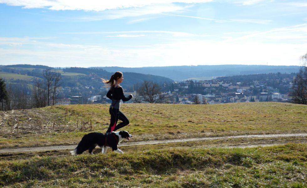 Gsund mit Hund in Passau