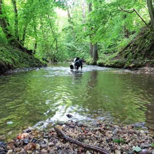 Hundeschule in Passau - Drei Flüsse Vier Pfoten